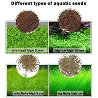 Aquarium Pflanzen Samen Wasser Gras Vordergrund Pflanzen Einfach Wachsen Plants