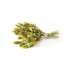 Olympus Mountain Tea Whole Loose Greek Herbal Tea 750g-2kg - Sideritis Scardica