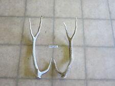 Axis Deer Antler Set/Pair Shed Exotic Texas Wildlife hunting AA0281
