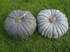 20 Graines Potiron blue Jarrahdale / 20 Seeds Pumpkins blue jarradale