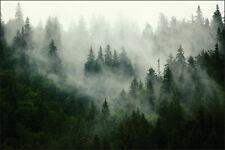 VLIES FOTOTAPETE Tapeten Rollen Wald im Nebel Wandbilder XXL Bäume Natur 325