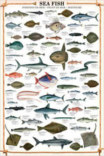 SEA FISH 59 Saltwater Species Sportsfisherman Fly Fishing Wall Chart Poster