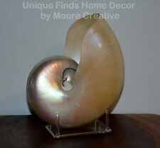 "Pearl Nautilus Shell 7""- 7.5"" Beach Seashell Pearlized Nautilus with Stand"