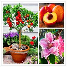 20 Pcs Peach Tree Seed Dwarf Bonsai Fruit Home Garden Plants Outdoor Ornaments