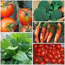 Hortalizas combi-pack verduras semillas semillas de semillas