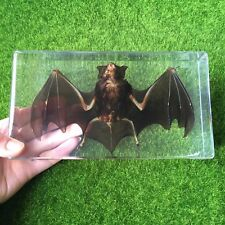 Large Bat Paperweight Education Animal Specimen in 190x105x35mm Resin Block