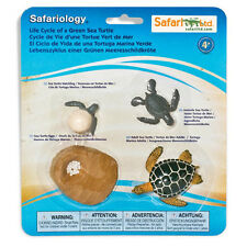 Life Cycle Of A Green Sea Turtle Safari Ltd NEW Toys Educational