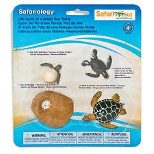 Life Cycle Of A Green Sea Turtle Safari Ltd NEW Toys Educational