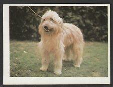 Dogs - Spanish Trade Trading card circa 1985 #71 Catalan Sheepdog Dog