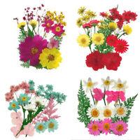 Cute Pressed Mixed Dried Flowers DIY Art Craft Scrapbook Phone Gift Decor Preci