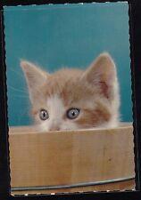 Vintage Postcard Adorable Cat Kitten Peeping From Box - Hallmark - Unused - #7