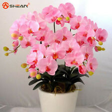 AA 100 Pink Phalaenopsis Orchid Seeds Flower Seeds Indoor Bonsai Orchids