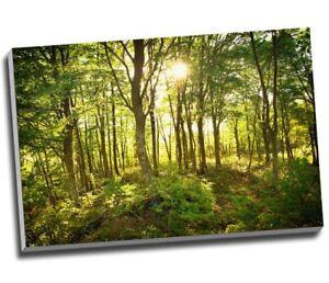 """Sun Peering Through Green Trees Canvas Print Wall Art 30x20"""" A1"""