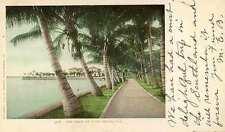 1902 PALM BEACH FL The Walk Palm Trees Detroit postcard