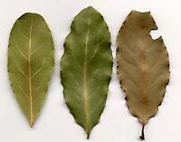 Sri lanka  Natural  Organic dried  Avocado Leaves & Powder Green Tea Free Ship