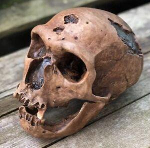 Neanderthal Skull Replica La Chapelle-aux-Saints 1:1 size