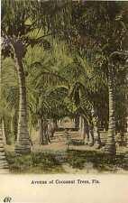 1902 FLORIDA FL Avenue of Cocoanut Trees postcard