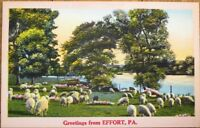 Effort, PA 1940s Linen Postcard: Rural Scene w/Sheep - Pennsylvania Penn
