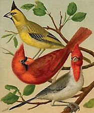 Three Cardinals~counted cross stitch pattern #2004~Birds Graph Nature Chart