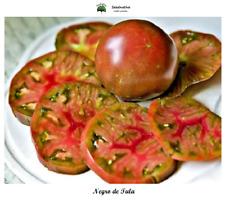 Tomate Negro de Tula - 40 semillas - seeds - BIO
