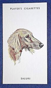 SALUKI   Vintage Biegel Portrait Small Card