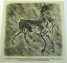 1878 magazine engraving ~ ERROR OF MODERN SCIENCE Fossil of Palaeotherium Magnum