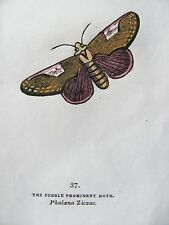 CAPTAIN THOMAS BROWN - PEBBLE PROMINENT MOTH - ENGRAVING 1844 - FREE SHIP US !!!