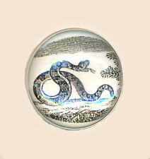 New listing Vintage Snake Botton; B&W Print Under Plastic Dome Set in Aluminum