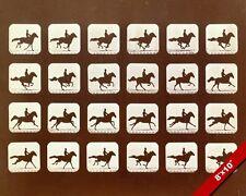 RUNNING HORSE PHOTOGRAPH EXPERIMENT ANIMATION CELLS ART REAL CANVAS GICLEEPRINT