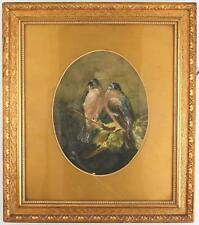 A late Edwardian watercolour painting of bull finches Signed F Allen Framed