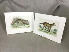 Antique Wild Animal Cat Prints Serval Leopard Cats Ca. 1896
