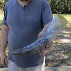 "15-1/2 inch Polished Cut ""Snake Skin"" Design Buffalo horn taxidermy # 30249"
