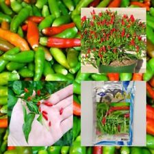 120 seeds/Thai sun hot seed pepper capsicum annuum ornamental chili seeds plant