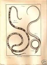 Dipse & Lemnisque Snakes 1789 Bonnaterre Herpetology