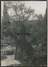 Jérusalem Jardin des Oliviers 1909 Vintage silver 6x9cm