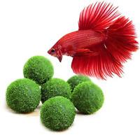 6 Pack  Marimo Moss Balls Beautiful and Natural Aquarium Decor Heirloom Gift NEW