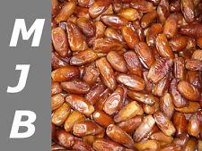 """1000 g dattes nature """"Deglet Nour"""" fruits secs Extra Qualité Sans Pierre 1 kg"""