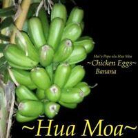 Musa Mai a Pop ulu Hua Moa Chicken Eggs Hawaiian Banana live plant 1 ft Tall