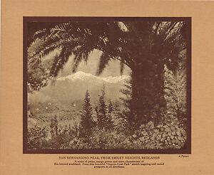 Antique San Bernardino Peak Smiley Heights Putnam Palms Photo Gravure Print