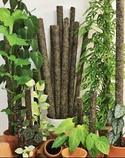 More details for sphagnum moss pole 100cm | indoor plant climbing support.
