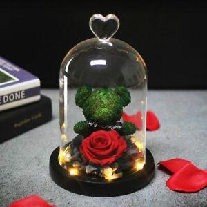 Rose LED Light Under The Dome Lovely Teddy Bear Molding In A Flask Eternal Rose