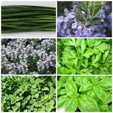 Herb Seeds Italian  6 pkts  rosemary,oregano thyme, garlic chives,basil, parsley