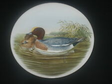 """POOLE Small Plate  Pair OF WIDGEON DUCKS Sitting on pond 6"""" Diam EXCELLENT GOULD"""