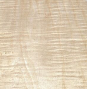 """Maple Curly Figured wood veneer 48"""" x 96"""" with paper backer 1/40"""" thickness AAA"""