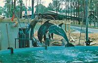 Atlanta~Six Flags Over Georgia~Dynamic Duo Aquatic Show~Porpoises~Trainer~1960s