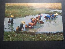 CPSM FARM AFTER HARVEST AT THEIR LEISURE CATCHING FISHES THAILAND