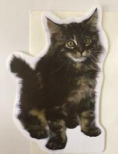 Unused Notecard w/ Env. Frazzled-Looking Cat / American Greetings