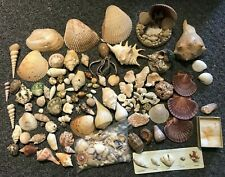 Large Lot of Decorative Various Seashells & Coral Collection Conch Starfish