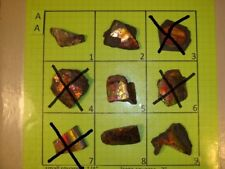 AA Group Mixed Ammolite Ammonite Your Choice (Pick One) Ready to Make Jewelry