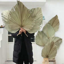 Natural Dried Palm Fan Leaf Plant Home Party Art Wall Hanging Wedding Decoration